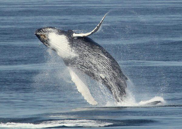 Maine Whale Watching