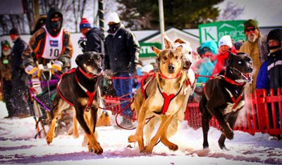 A team taking off in Fort Kent at the 2018 Can-Am Crown International Sled Dog Race. Photo Credit: Don Eno/Fiddlehaed Focus. For more Maine winter photos, click the image above or the link below.