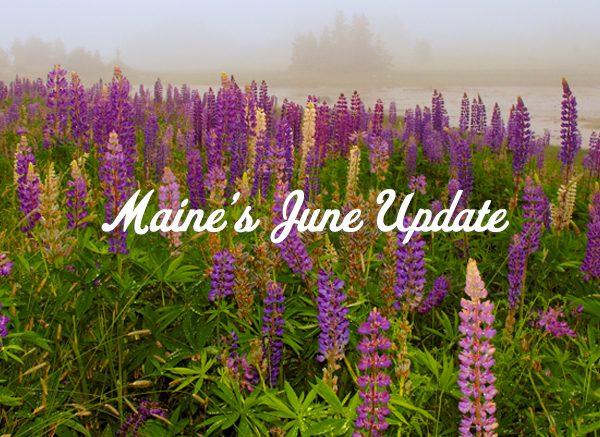 Maine's June Update
