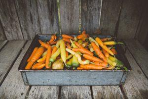 Maine farm-field-to-farm-table dinners